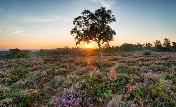 New Forest Nationaal Park